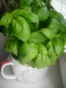 basil-in-ceramic-pot