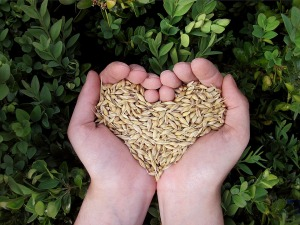 Plant Eat Nature Hands Cereals Heart Grains Food